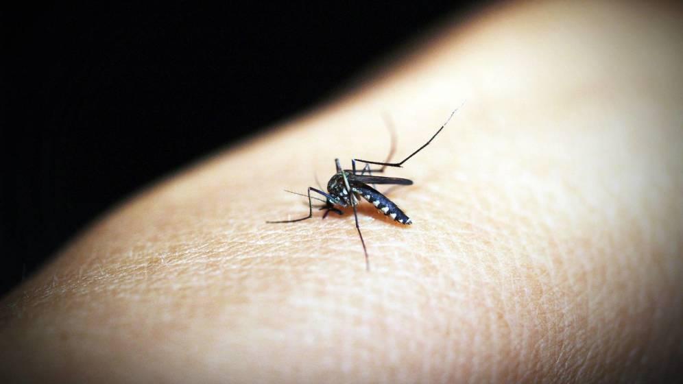 Medicamentos para tratar el apetito en seres humanos logran lo que parecía imposible: que los mosquitos dejen de picar